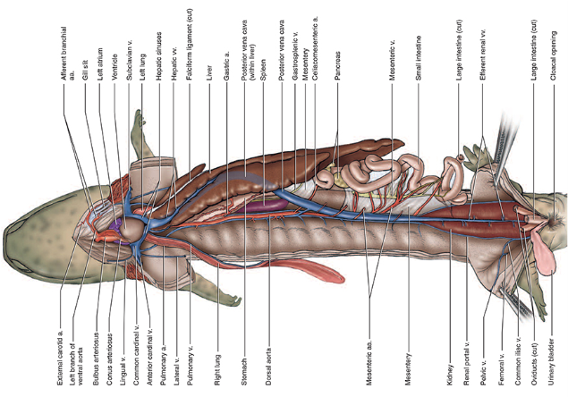 comparative anatomy manual of vertebrate dissection 3rd edition free download